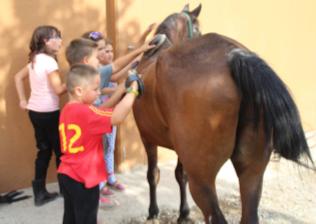 Campamento de verano en Granja Escuela Montellano